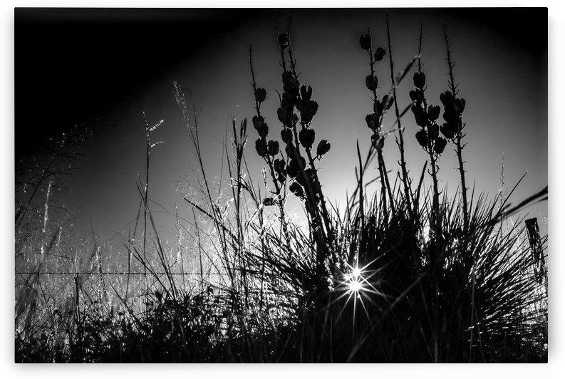 Double Specular Sunrise BW by Garald Horst