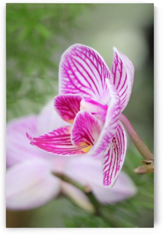 fleur orchidée by Kathleen Héon