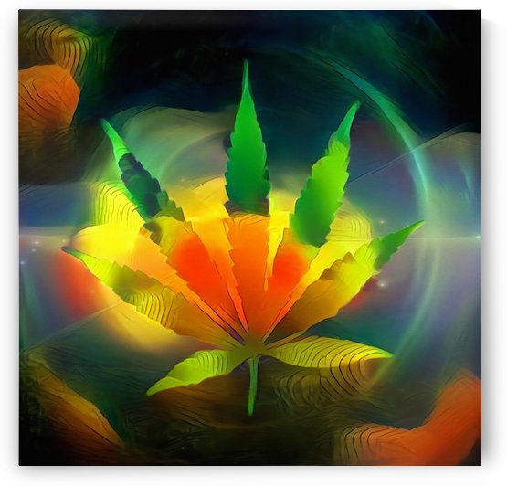 Colors of Marijuana by Bruce Rolff