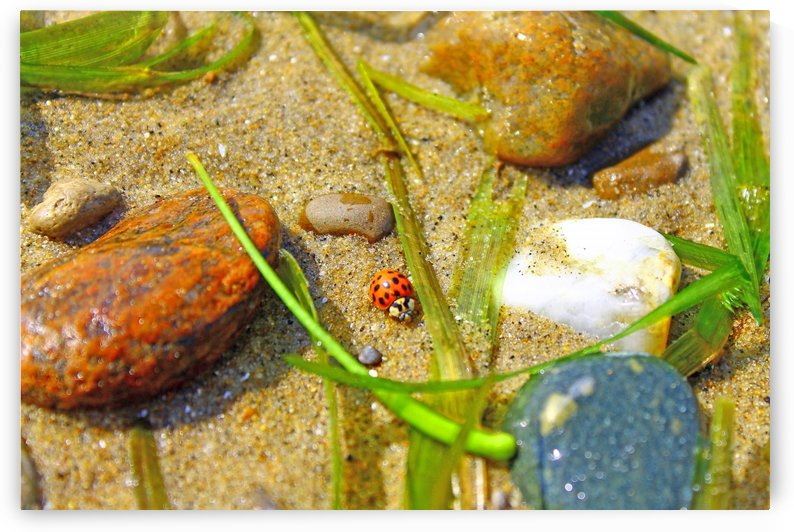 Ladybug in the sand by Gods Eye Candy