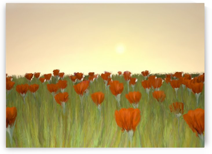 RED POPPIES at Sunset by ANA BORRAS