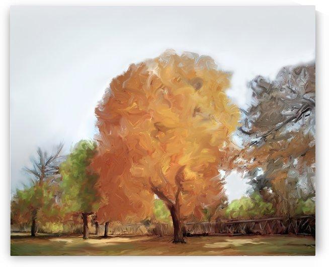 Fall landscape by ANA BORRAS