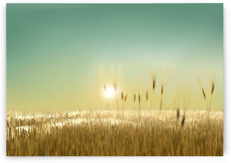 WHEAT FIELD by ANA BORRAS