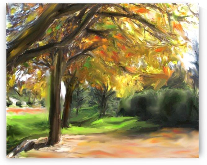 FALL TREES by ANA BORRAS