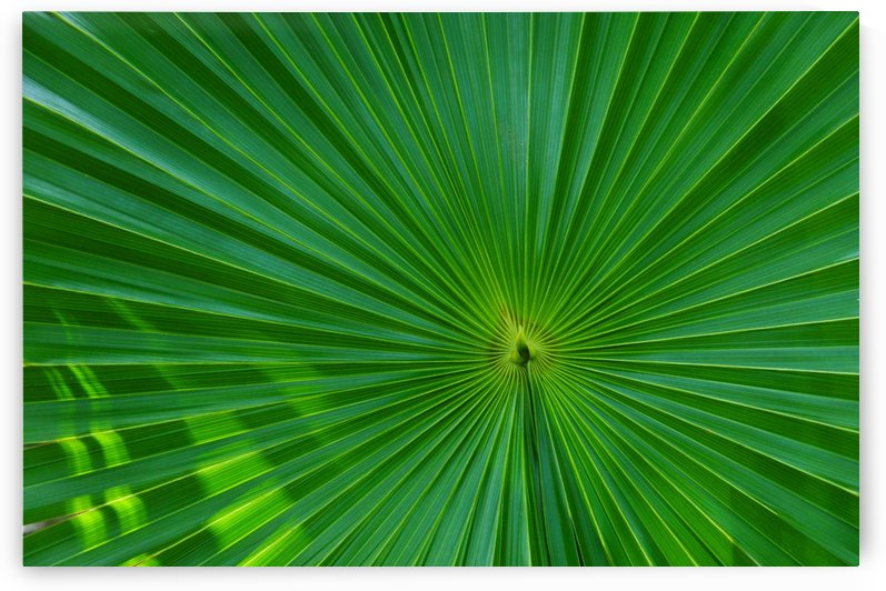 Palm tree detail by Alexandra Draghici