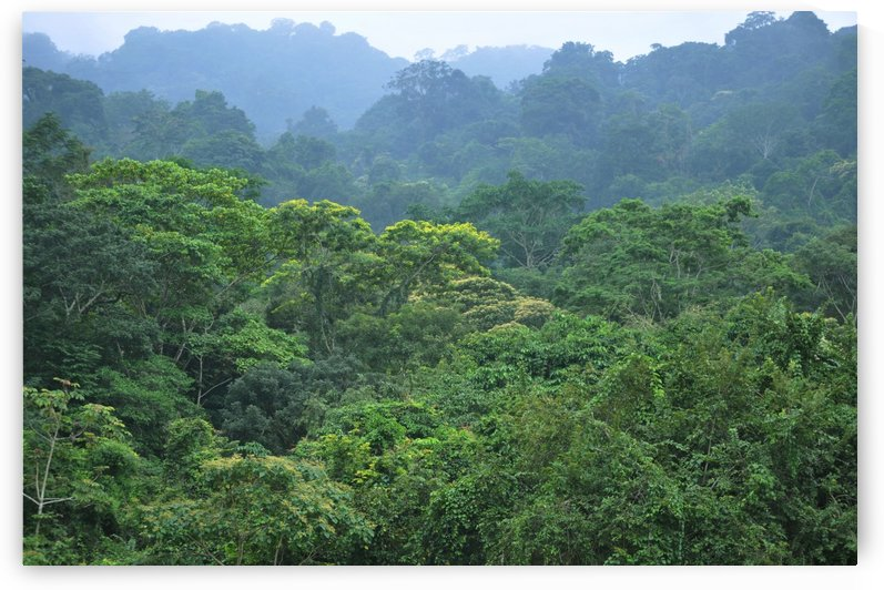 Rainforest by Alexandra Draghici