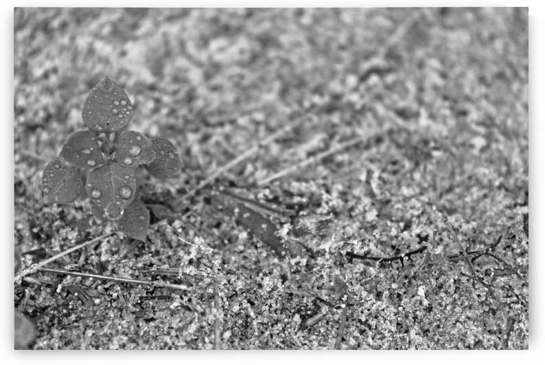 Rain in the Sand B&W by Gods Eye Candy
