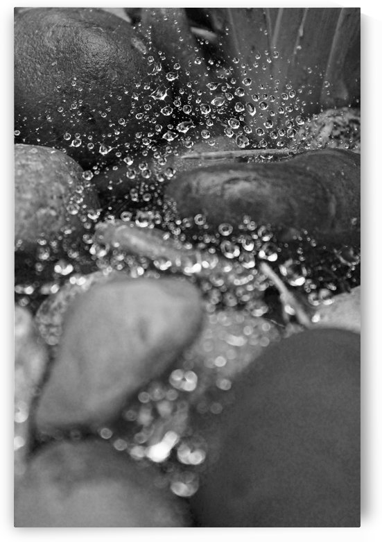 Spiderweb Raindrops B&W by Gods Eye Candy