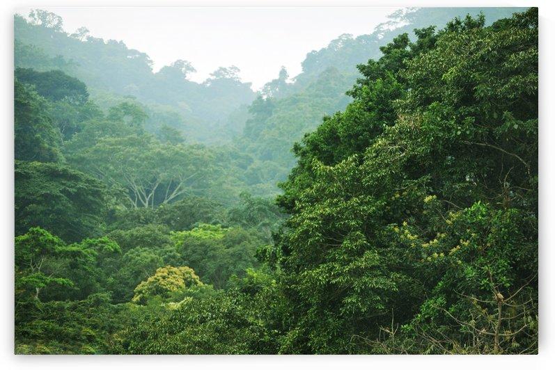 Rainforest Canopy by Alexandra Draghici