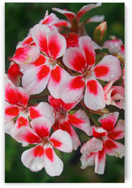Lots of Flowers by Gods Eye Candy