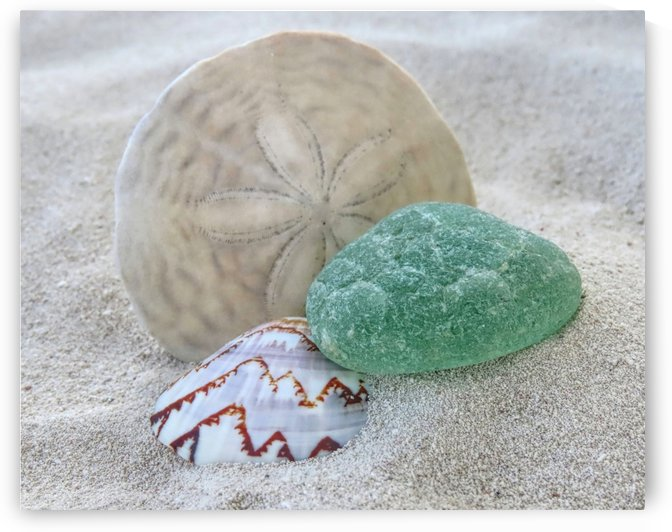 Sea foam green and sand dollar by Photography by Janice Drew