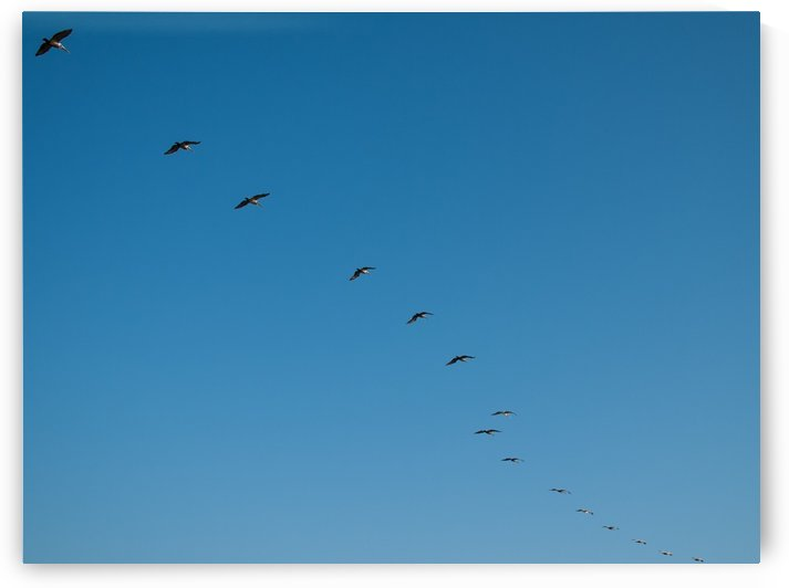 Formation by Wingo