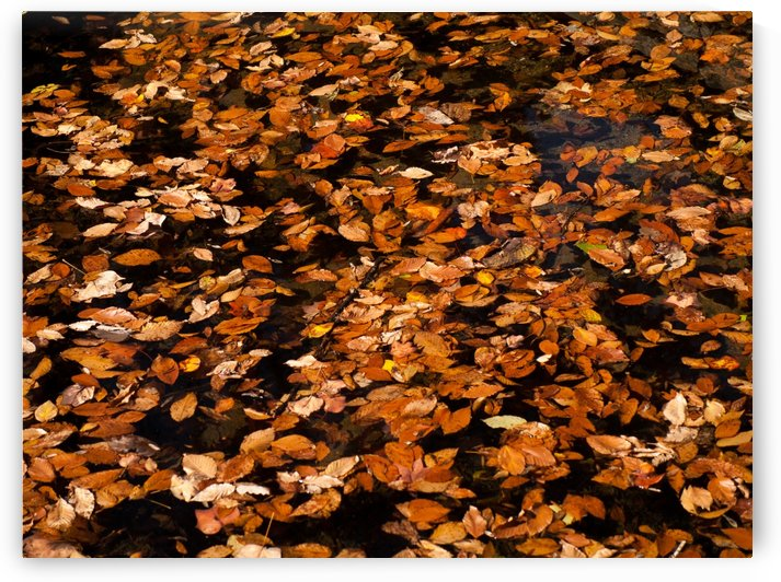The End of Autumn by Wingo