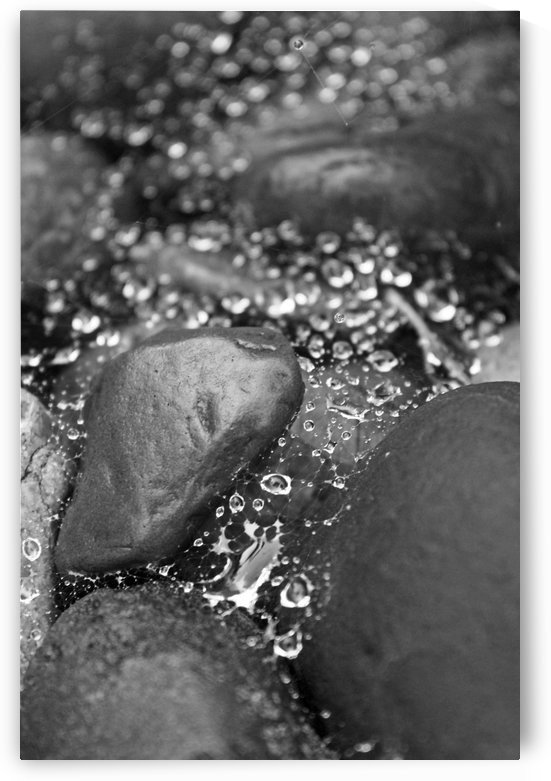 Scattered Drops B&W by Gods Eye Candy