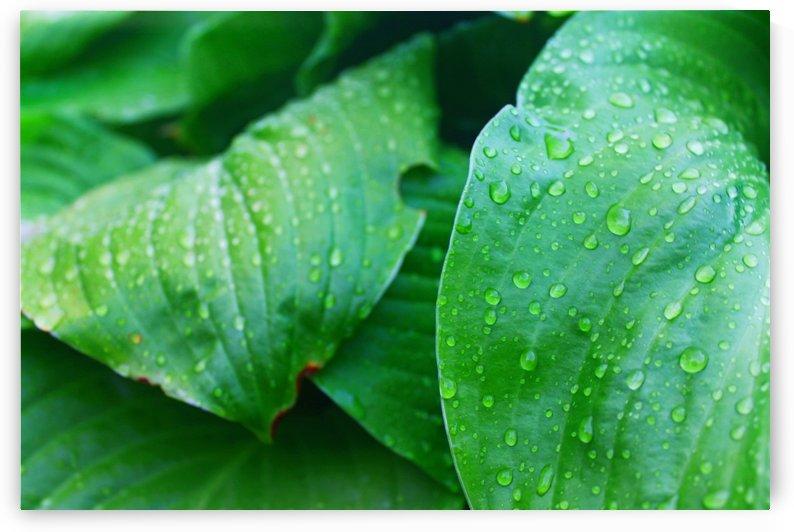 Droplets of Rain by Gods Eye Candy