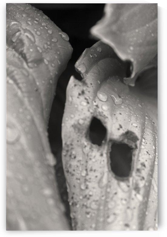 Black & White Raindrops by Gods Eye Candy