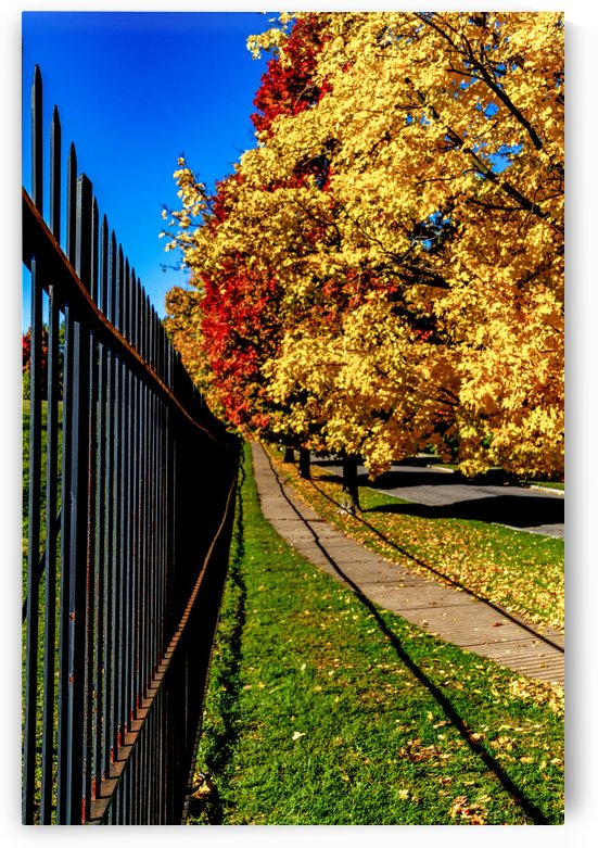 Autumn by the fence  by William Norton Photography