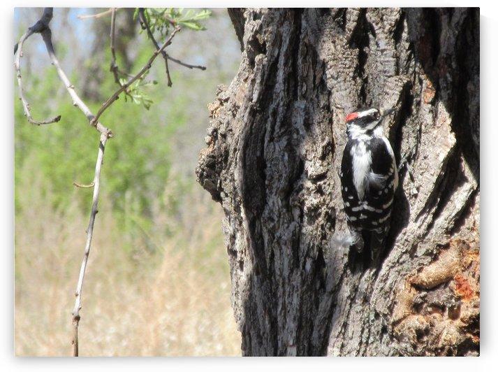 Woodpecker by Ryli Kuhnhenn