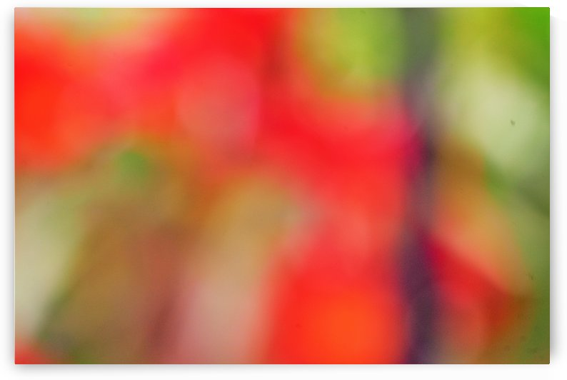 Abstract Bokeh Pattern Art Photograph - Red Green White and Purple by Puzbie