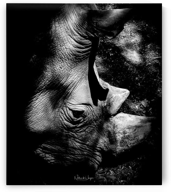 Sad Eyes by Nelis de Jager