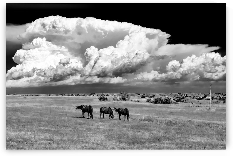 Grazing Before The Storm BW by Garald Horst