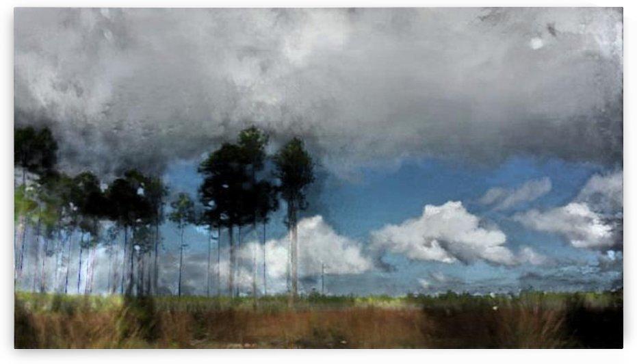 Black forest by Kala