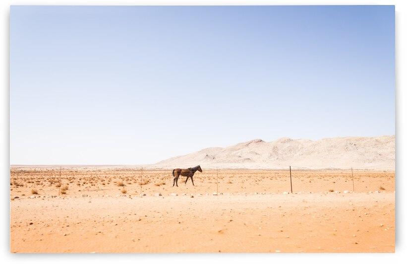 KALAHARI HORSE by ANDREW LEVER GALLERY