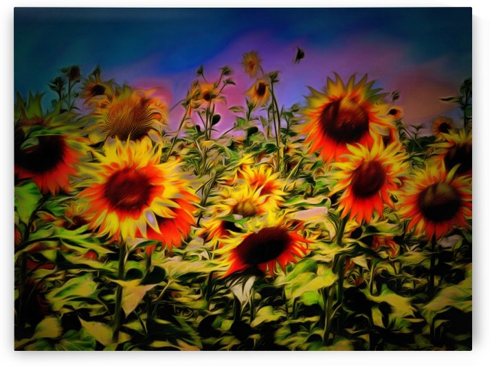 Sunflower Breeze by Dorothy Berry-Lound