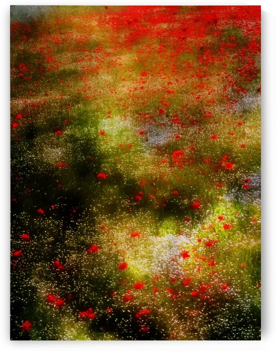 Poppies for Remembrance by Dorothy Berry-Lound