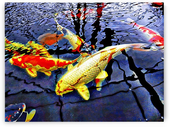 Koi Carp Huddle by Dorothy Berry-Lound
