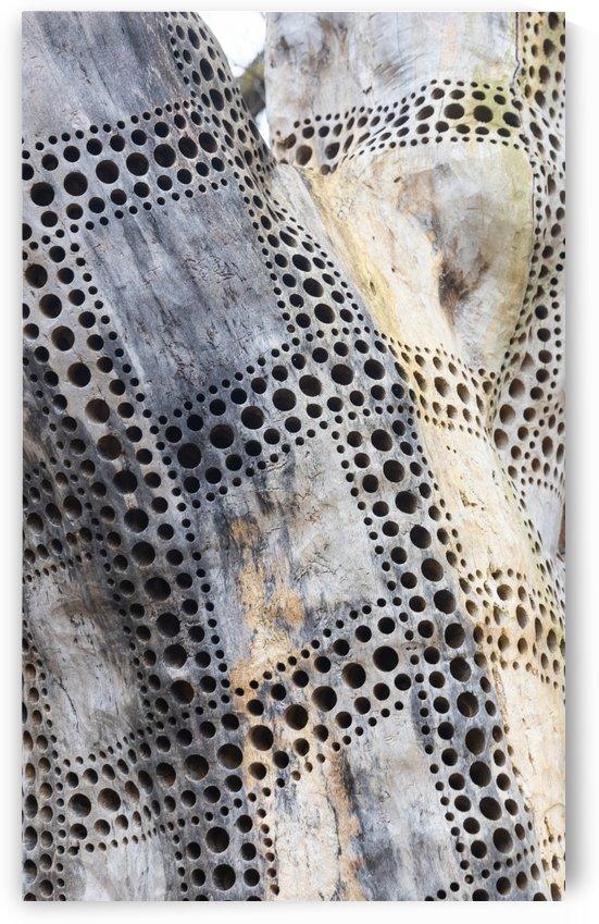 Pattern Tree by Per-Anders Gunnarsson