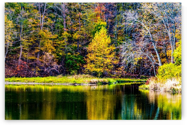 Peace by William Norton Photography