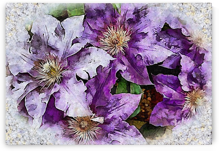 Dreams of Lilac Clematis by Dorothy Berry-Lound