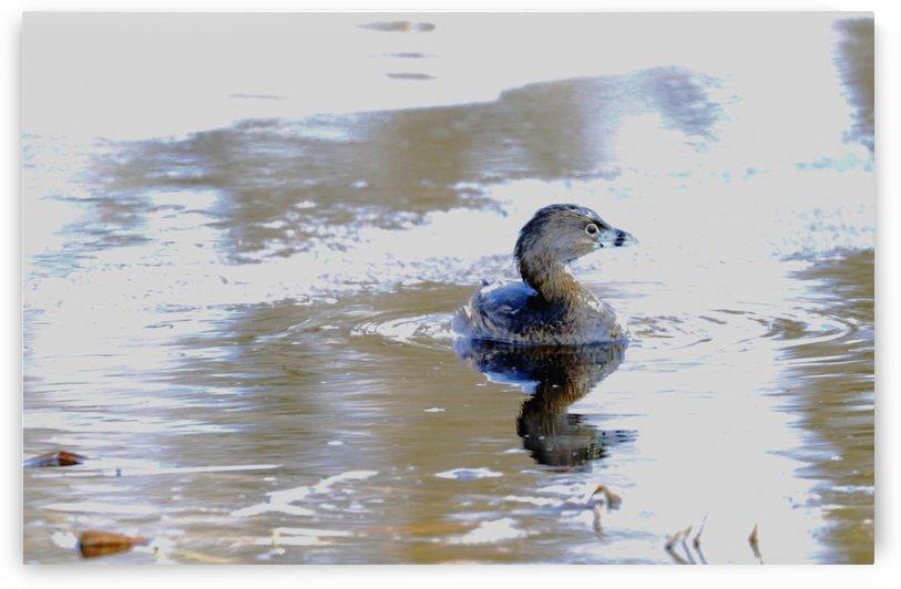 Part Bird Part Submarine by Deb Oppermann