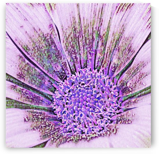 Gazania Flower - Abstract shades of lilac art by Puzbie