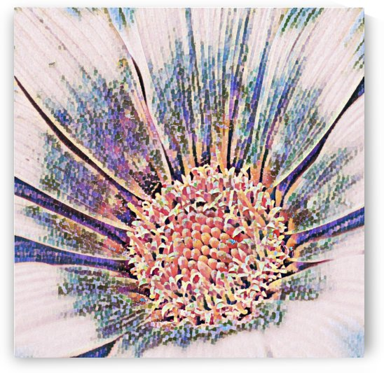 Delaunay Gazania - abstract flower art by Puzbie