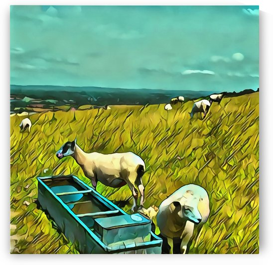 Sheep At The Water Trough by Dorothy Berry-Lound