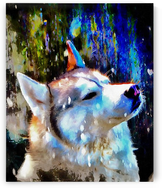 Husky Enjoying the Snow by Dorothy Berry-Lound