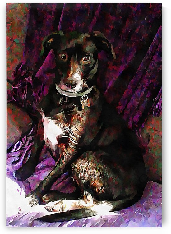 Purple Posing Puppy by Dorothy Berry-Lound