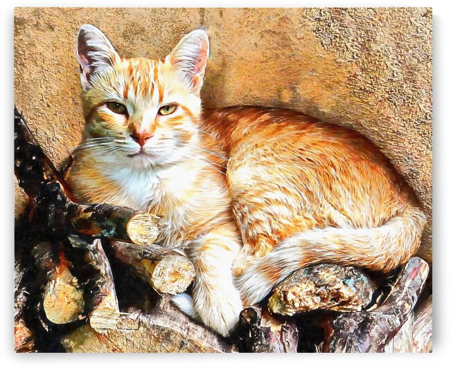 Hogarty The Ginger Cat by Dorothy Berry-Lound