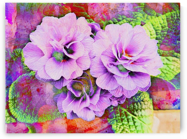 Primula Lilac Fantasy by Dorothy Berry-Lound