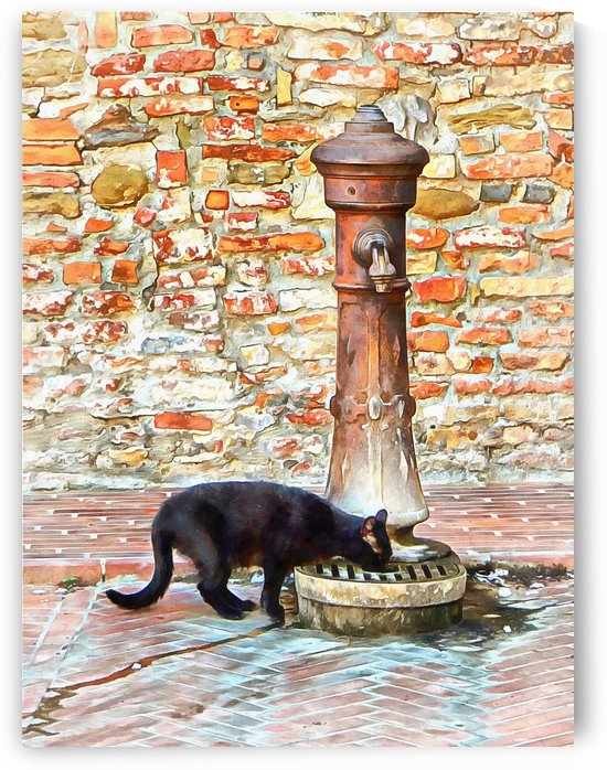 Thirsty Black Cat by Dorothy Berry-Lound