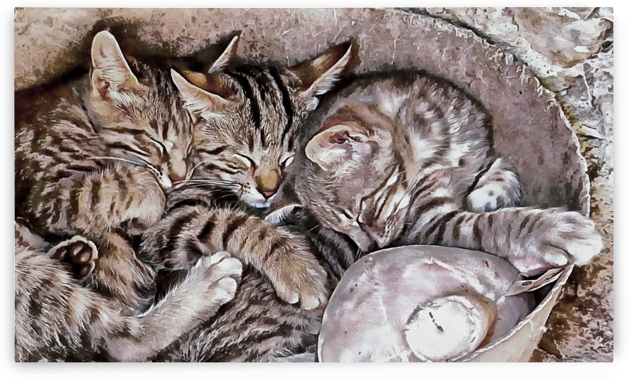 Snoring Purrs of Kitten Brothers by Dorothy Berry-Lound