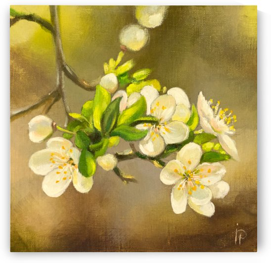Apple Tree Blossoms by Ineta