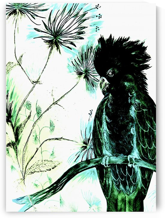 BLACK GREEN EXOTIC COCKATOO  TROPICAL PARROT DECO PRINT ART POSTER by jacqueline mcculloch