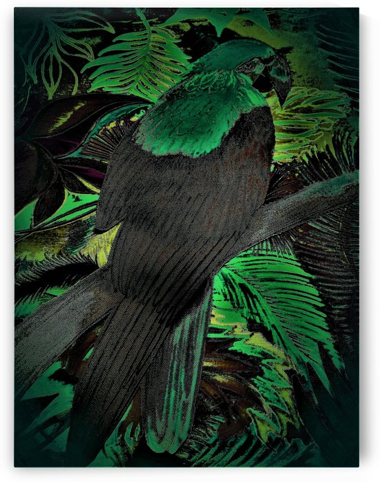 GREEN BLACK DARK MACAW TROPICAL ART DESIGN PARROT PRINT INK DRAWING by jacqueline mcculloch