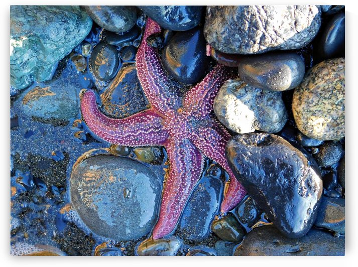 Low Tide Starfish by 151 West