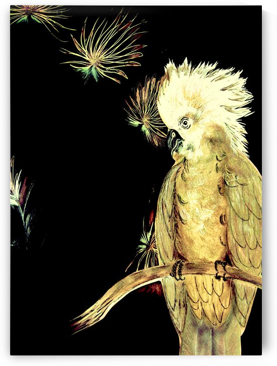BLACK GOLD TROPICAL COCKATOO  PARROT ORIENTAL ART POSTER DECO PRINT by jacqueline mcculloch