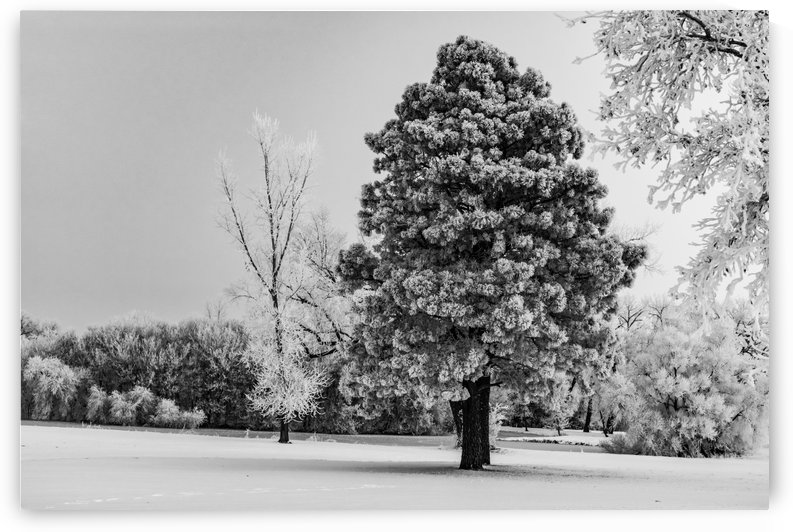 Magnetic Snow BW by Garald Horst