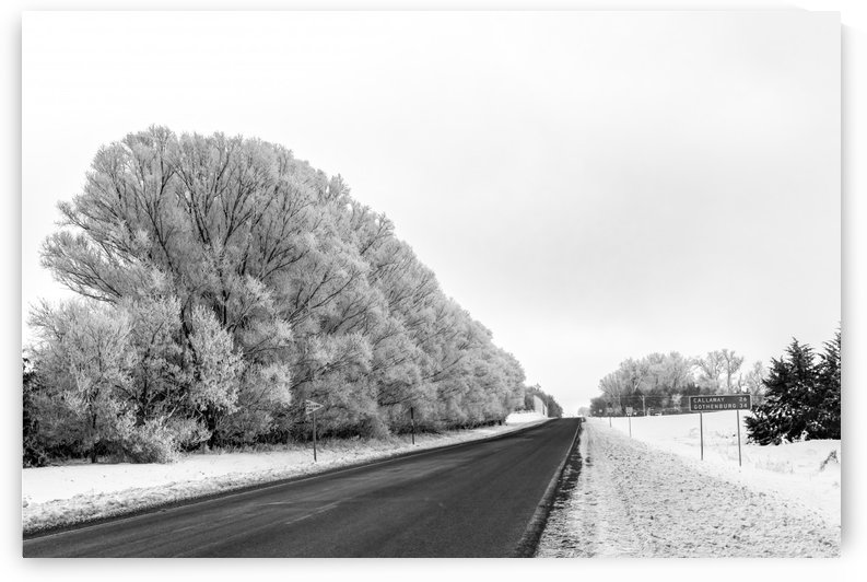 Over Night Winter Foliage BW by Garald Horst